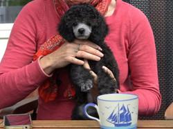 Karlos puppy