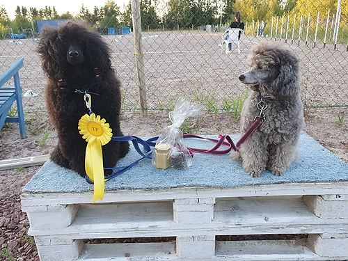 Official competition, Agility.ax 19.8.2020
