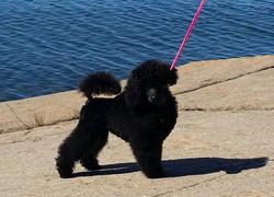 Kajsa 12 w. old at the beach