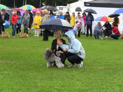 Dog Show in rain