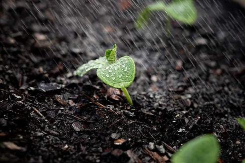 soil on sundays 3.jpg