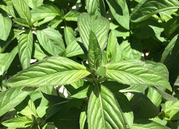 Menthol Mint