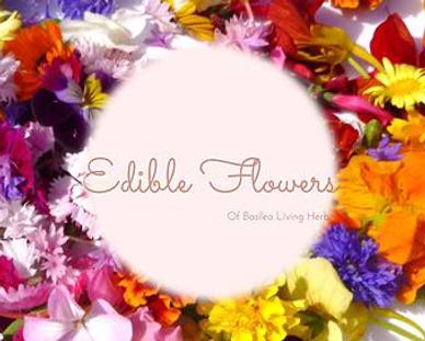 Edible Flowers by Basilea Living Herbs