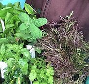 Mixed herbs from Basilea