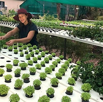 Sarah Heath checking herbs at Basilea farm