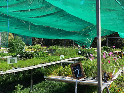 Basilea Farm Nursery plants