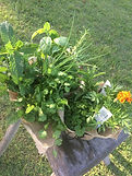 Mixed herbs, greens and edible flowers from Basilea