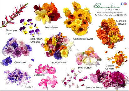 Selection of Basilea Edible Flowers
