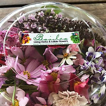 Basilea mixed Edible Flower pack