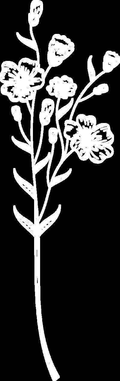 bloem1.png
