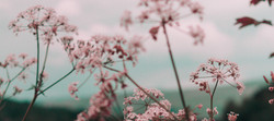 Pink%20Flower_edited