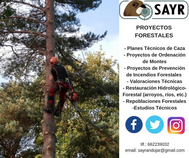 FOREST WORK.jpg