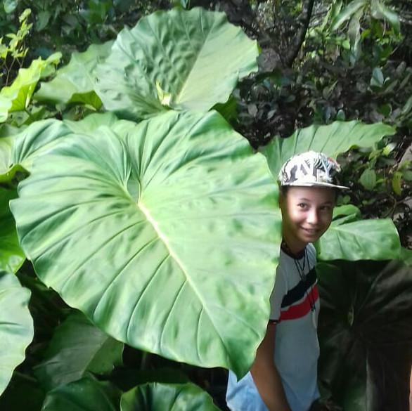 feuilles géantes