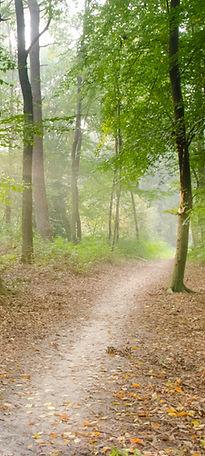 Le chemin pour le bien-être