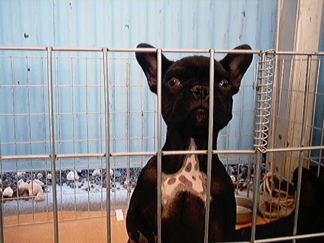 Hundeaustellung Fuerte Oktober 2001 (14)