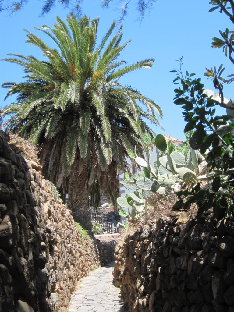 Fuerteventura Juni 2011 (55).JPG