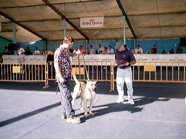 Hundeaustellung Fuerte Oktober 2001 (38)
