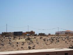 Fuerteventura Juni 2011 (64).JPG