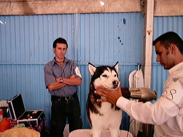 Hundeaustellung Fuerte Oktober 2001 (21)