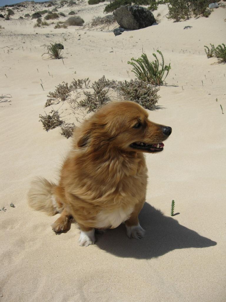Fuerteventura Mai2009 (71).JPG