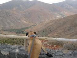 Fuerteventura Mai2009 (35).JPG