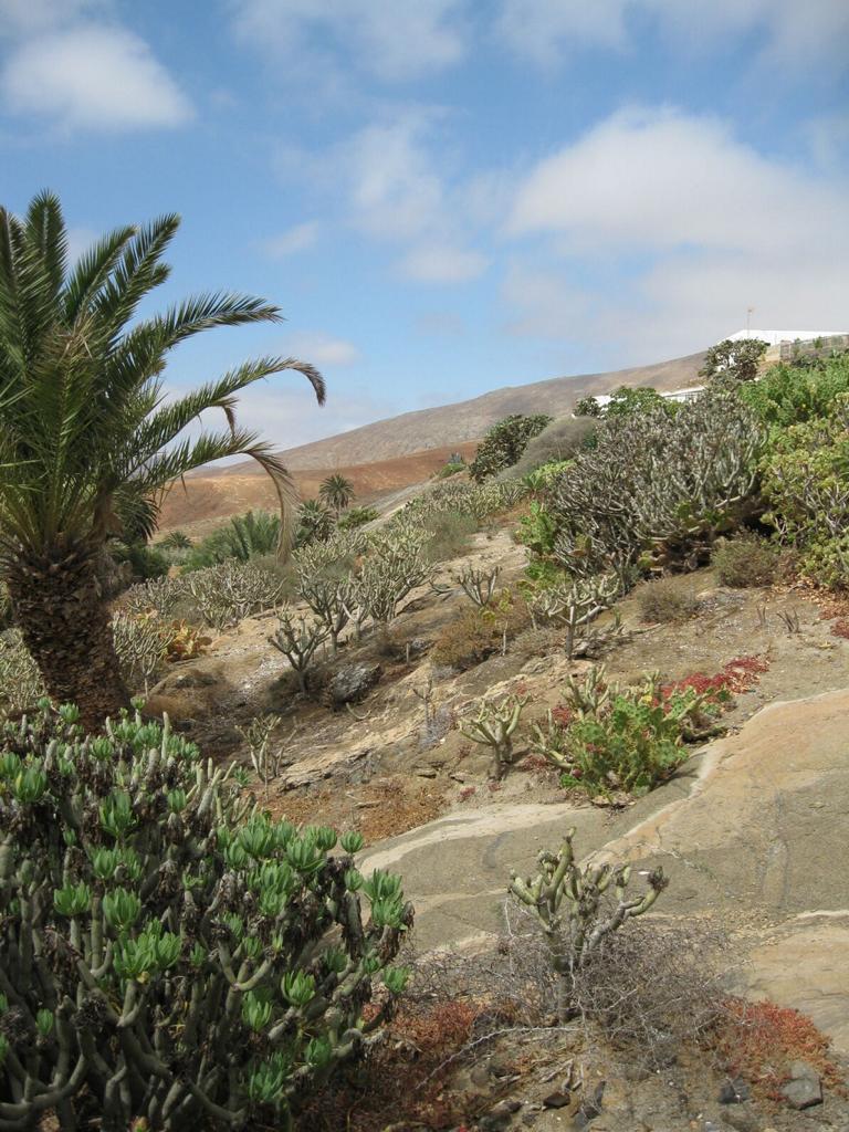 Fuerteventura Mai2009 (93).JPG