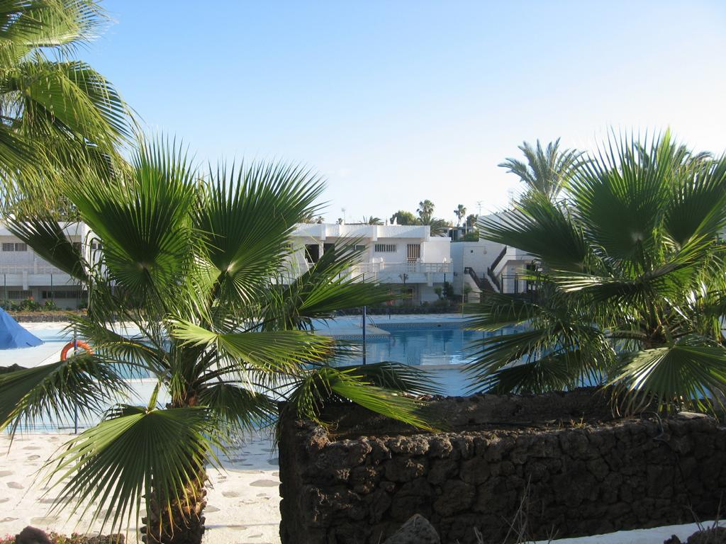Tenerife Mai 2008 (3).JPG