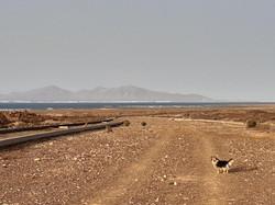 Fuerteventura Febr 2020 web (118)