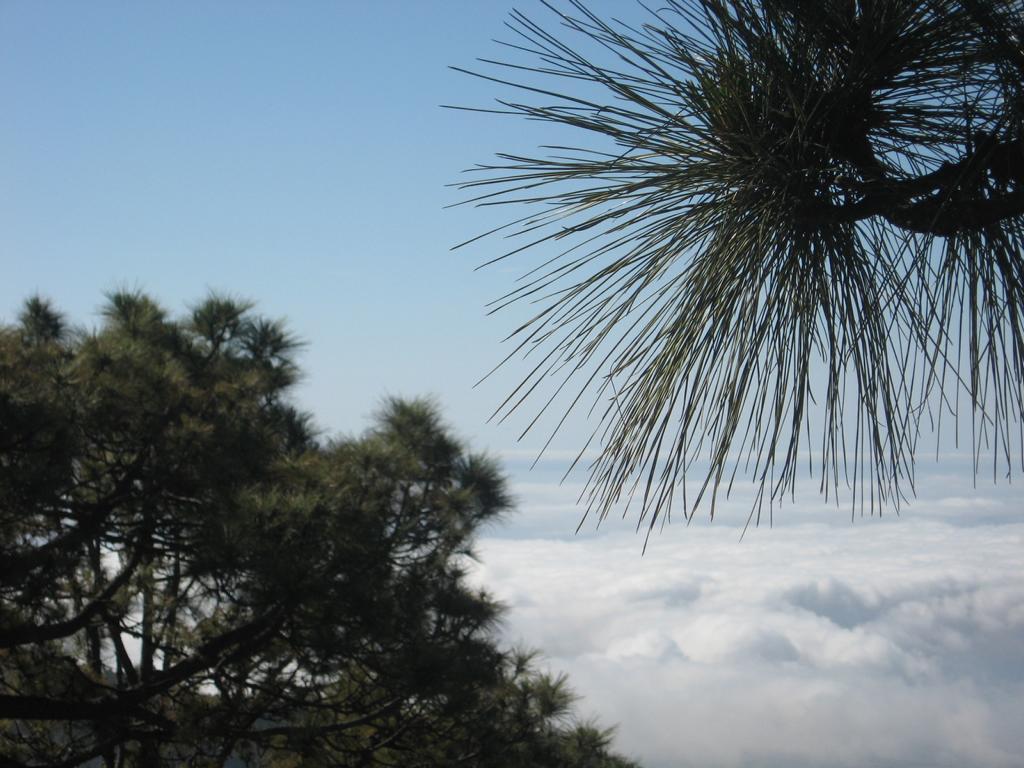 Tenerife Mai 2008 (406).JPG