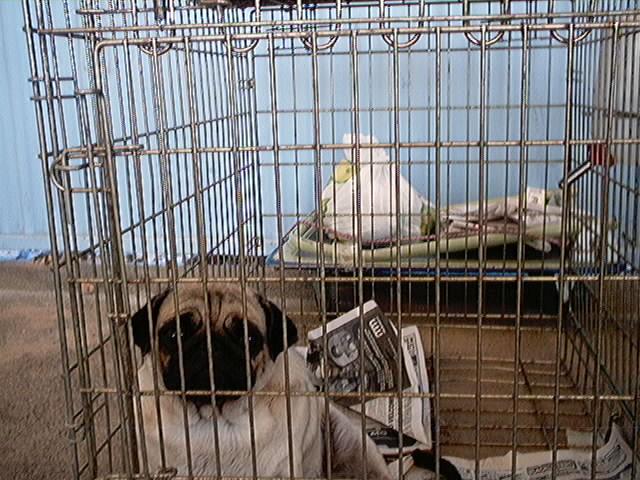 Hundeaustellung Fuerte Oktober 2001 (13)