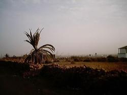 Leben auf Fuerte 2001 (1)