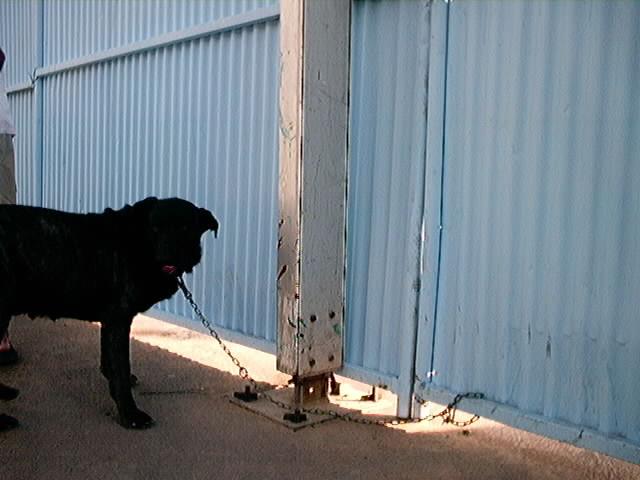 Hundeaustellung Fuerte Oktober 2001 (59)