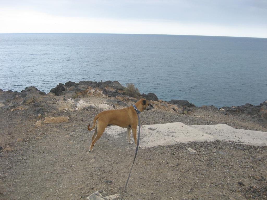 Tenerife Mai 2008 (103).JPG