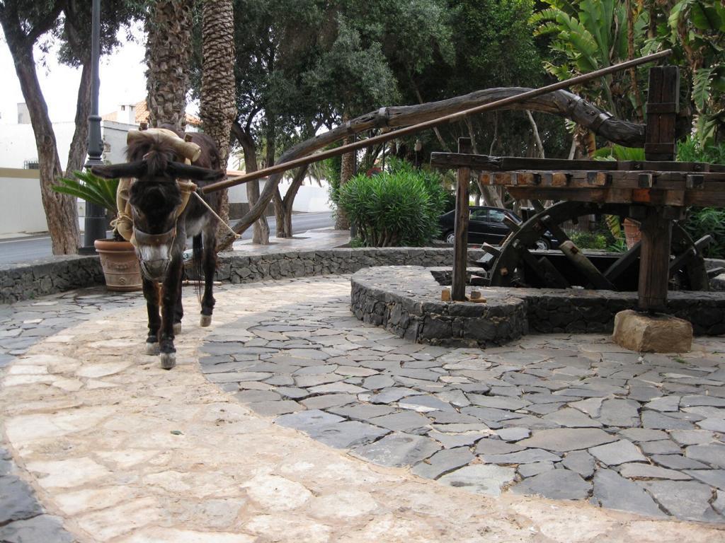 Fuerteventura Mai2009 (30).JPG