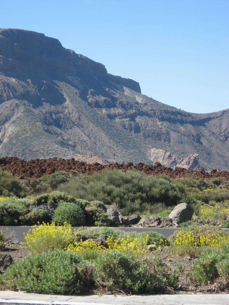 Tenerife Mai 2008 (517).JPG