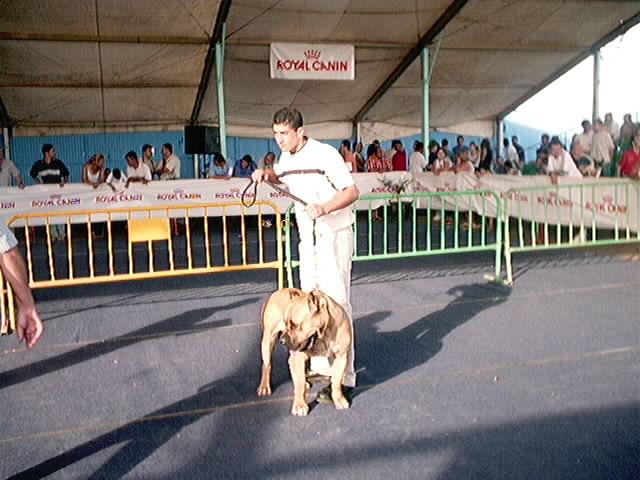 Hundeaustellung Fuerte Oktober 2001 (65)