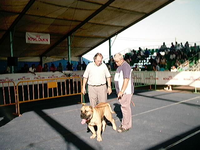 Hundeaustellung Fuerte Oktober 2001 (45)