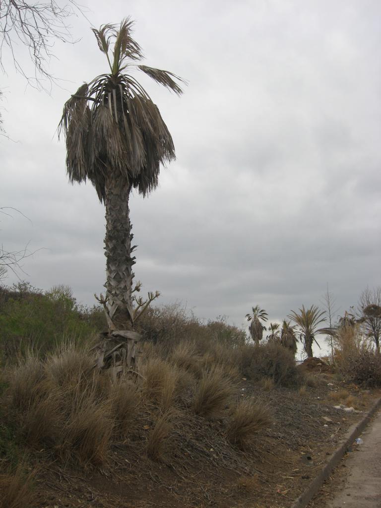 Tenerife Mai 2008 (93).JPG