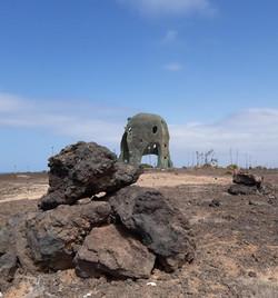 Fuerteventura Febr 2020 web (126)