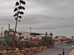 Fuerteventura Febr 2020 web (19)