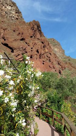 Gran Canaria Mai 2015 (17)_edited.JPG