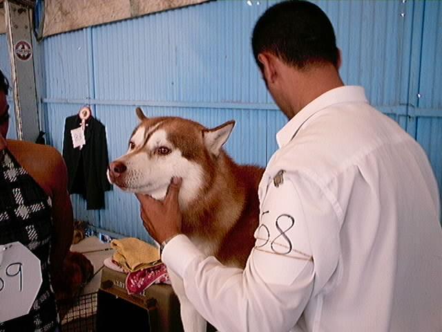 Hundeaustellung Fuerte Oktober 2001 (33)