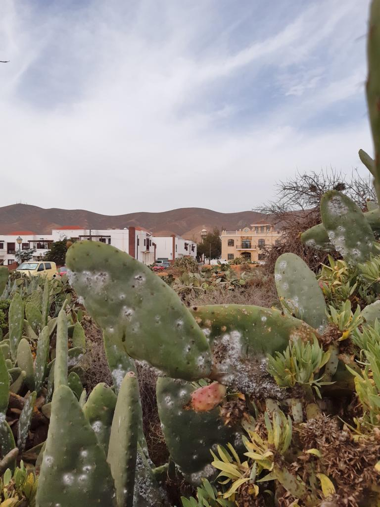 Fuerteventura Febr 2020 web (22)