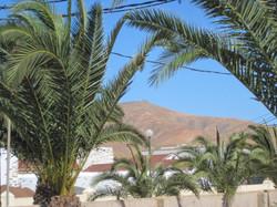 Fuerteventura Juni 2011 (38).JPG