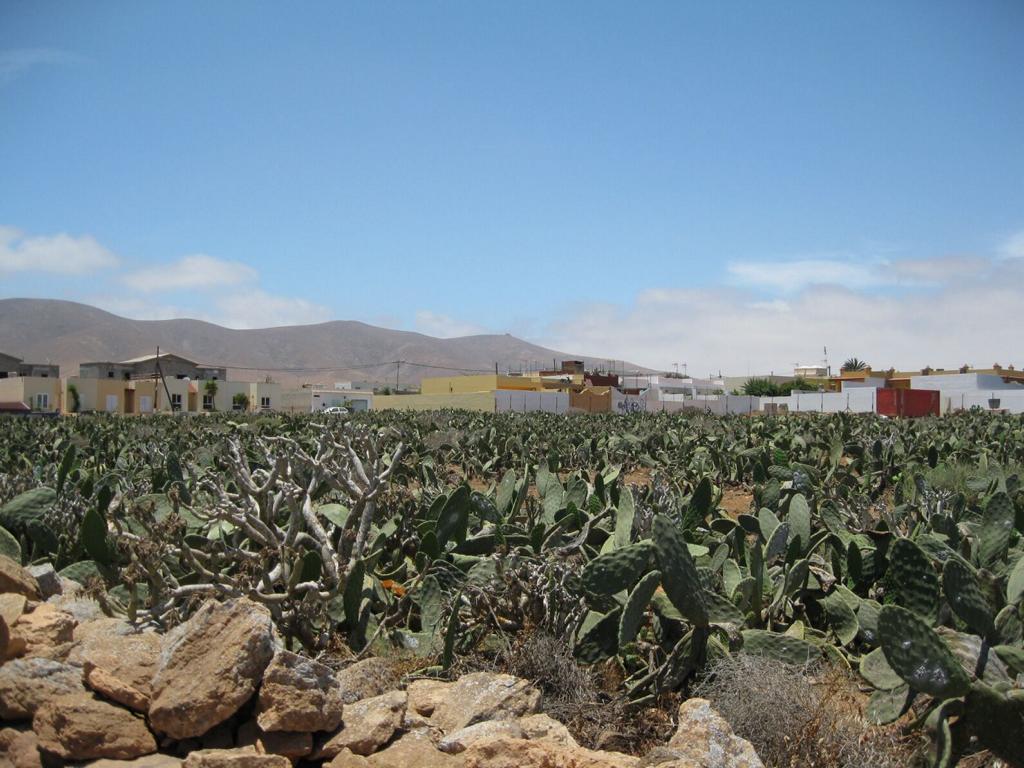 Fuerteventura Mai2009 (78).JPG