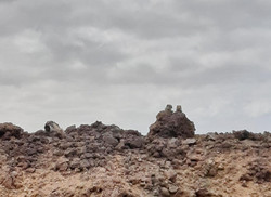 Fuerteventura Febr 2020 web (92)