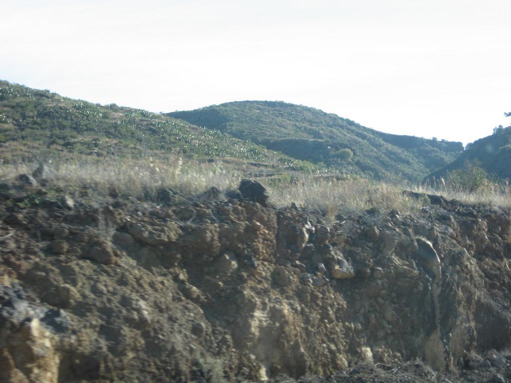 Tenerife Mai 2008 (361).JPG