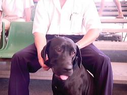 Hundeaustellung Fuerte Oktober 2001 (23)