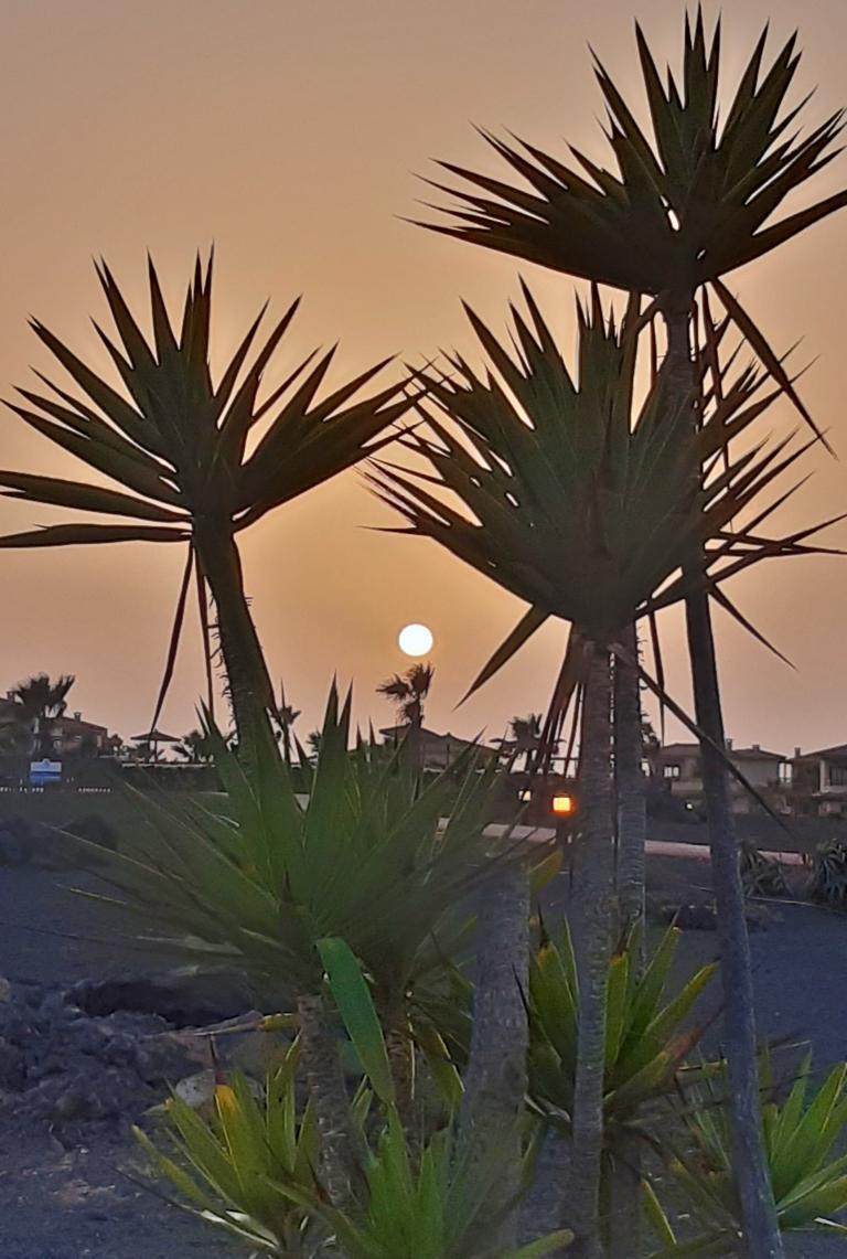 Fuerteventura Febr 2020 web (77)