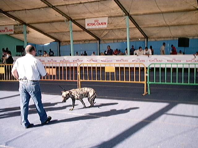 Hundeaustellung Fuerte Oktober 2001 (29)